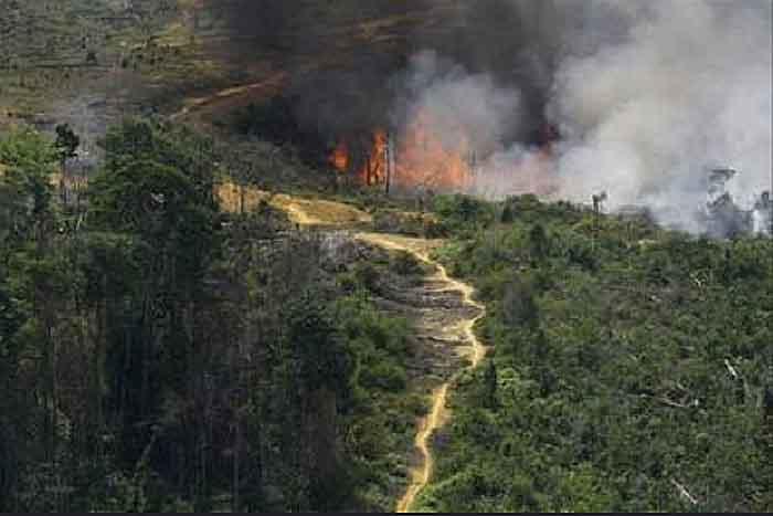 Rodung mit Feuer in Indonesien