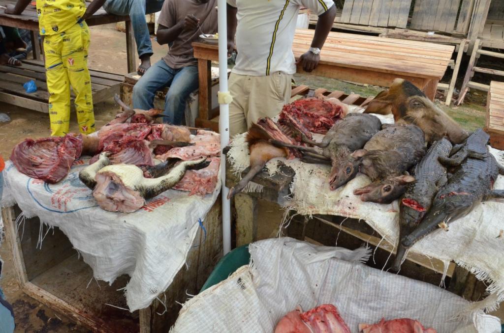 afrikanische Waldtiere auf einem Markt