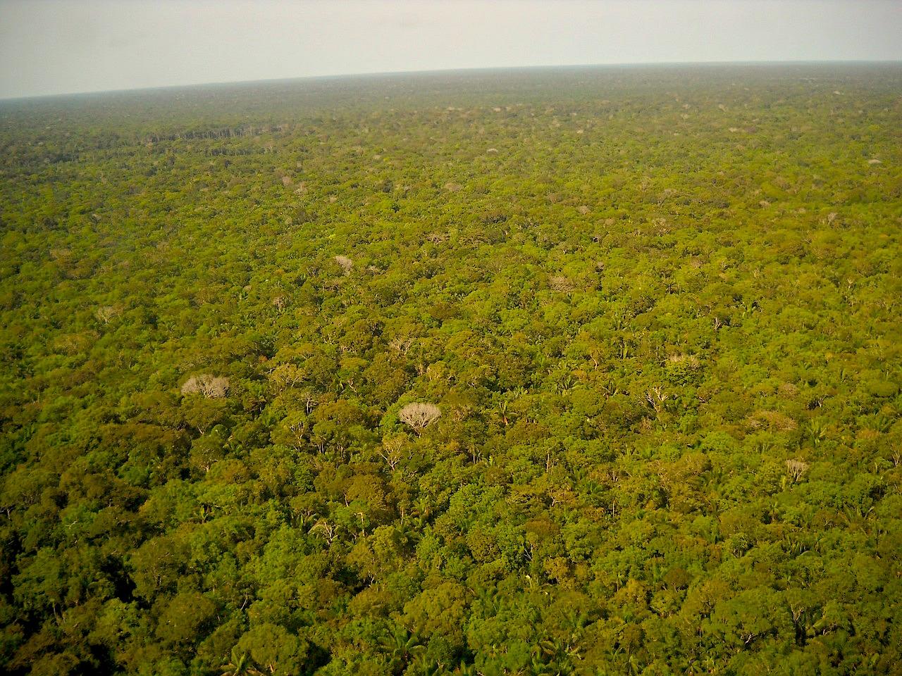Brasilien Amazonasgebiet