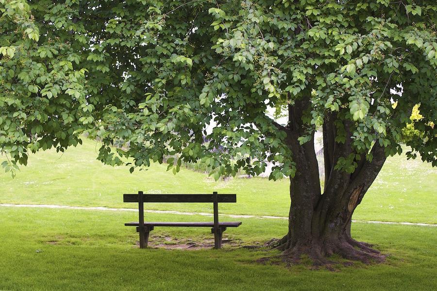 Bank unter Baum