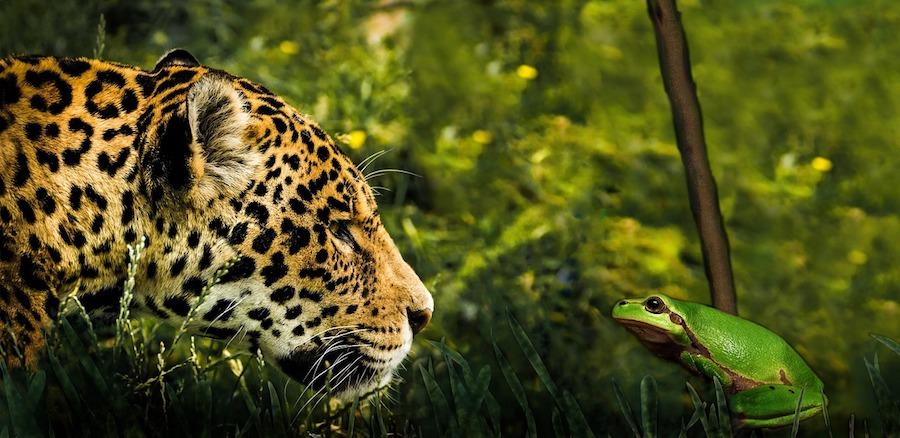 Jaguarkopf