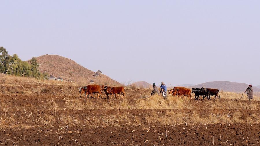 Landschaft Lesotho