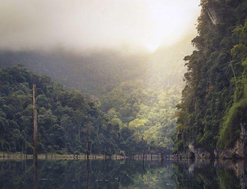 Deutschland startet mit 200 Millionen Euro Kreditprogramm der Weltbank für Waldschutz