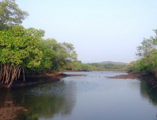 Wie Lagunen als Kohlenstoffspeicher agieren können