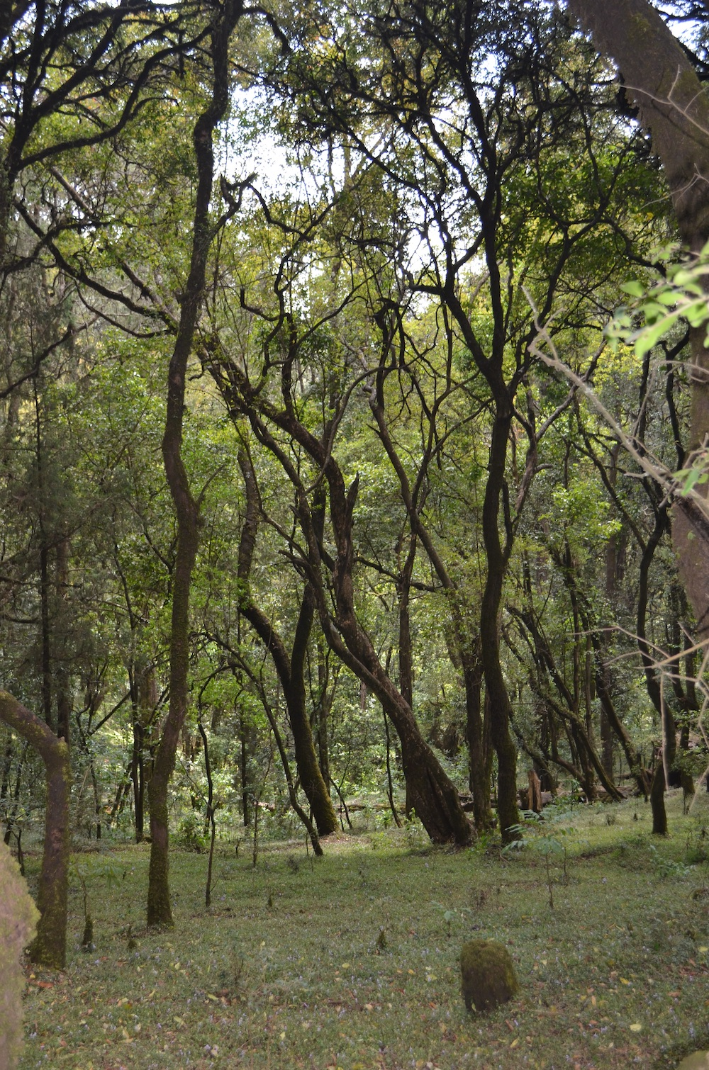 Äthiopien Wald fair-economics.de