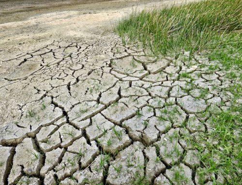 Bauernverbandschef warnt vor Schwächen bei der Bekämpfung der Klimakrise