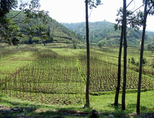 Centre of Excellence in Rwanda aims to support African farmers and rural communities