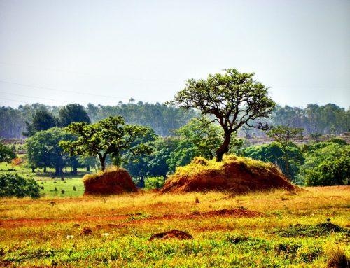 Warum BlackRock zum Thema Viehzucht im Zusammenhang mit der globalen Erwärmung schweigt