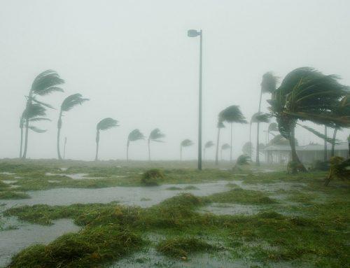 Meeresspiegelanstieg und seine Folgen: Wie sich Florida dafür rüstet