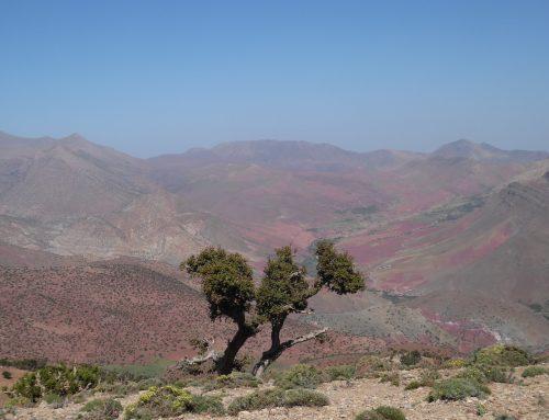 Heulen im Dunkeln: Wie Wissenschaftler eine neu entdeckte Wolfsspezies in Marokko erkunden