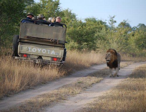 Jenseits des Tourismus: Ein Call für Geschäftsideen zum Schutz der afrikanischen Tierwelt und Ökosysteme. Dt/engl.