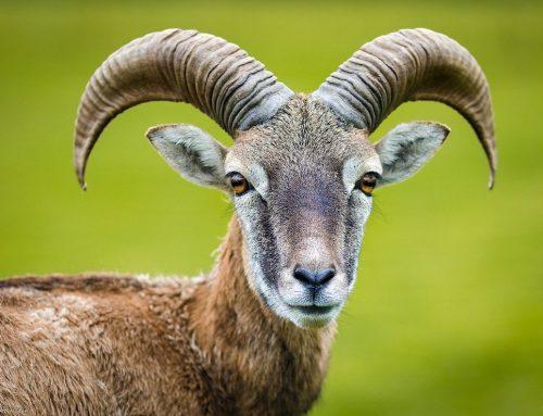 Deutschland: Ein Drittel der Arten in der Roten Liste der Säugetiere ist bestandsgefährdet