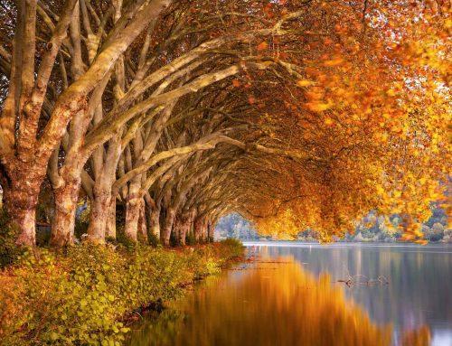 Europäischen Umweltagentur: Natürliche Vielfalt in Europa geht zurück