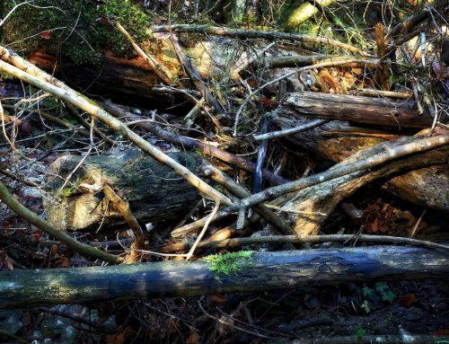Warum das Multitalent Wald in Not ist