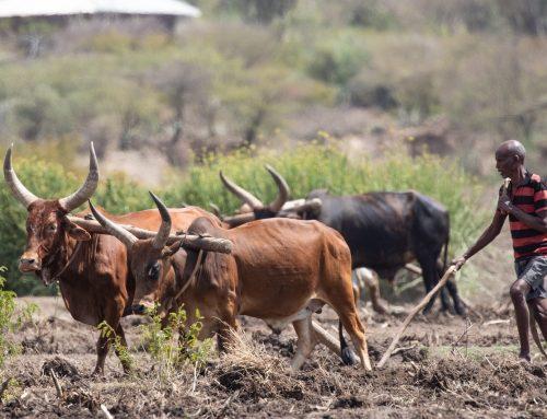 Illegaler Kapitalabfluss raubt Afrika und seinen Menschen die Zukunft. Kapitalfluss von riesigen Summen dt./eng.