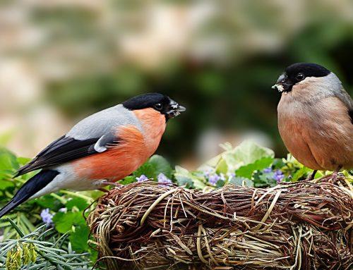 Warum viele Vögel in der Nähe glücklich machen