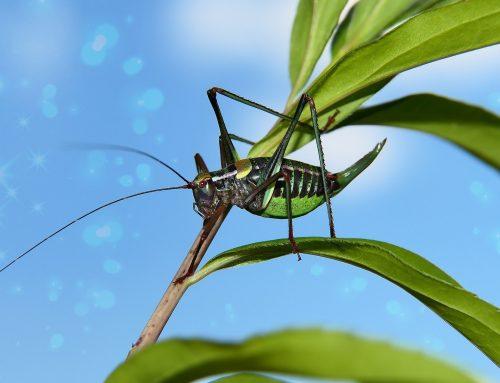 Klimaänderungen, die sich in kurzen Zeiträumen ereignen, beeinflussen die Biodiversität