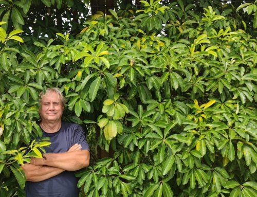 Ulrich Kronberg: Sofort müssen alle alten Bäume über 100 Jahre unter besonderen Schutz gestellt werden.