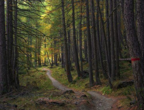 Warum Wälder und Ökosysteme mehr als nur Kohlenstoffspeicher sind