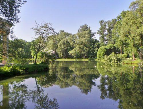 Wie sich Biodiversität positiv auf die mentale Gesundheit auswirkt