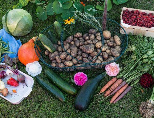 Regional ist das, was zählt – Frisches Gemüse direkt vor die Haustür