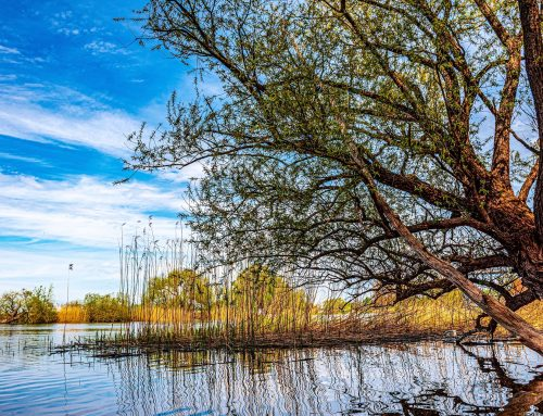 NABU: Auswirkungen künftiger Hochwasserereignisse reduzieren
