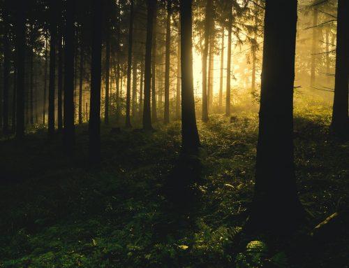 Patient Wald braucht dringend Hilfe – Unsere Wälder leiden unter dem Klimawandel. Der Gesellschaft müssen der Erhalt und die Schaffung klimastabiler Forsten mehr wert sein.